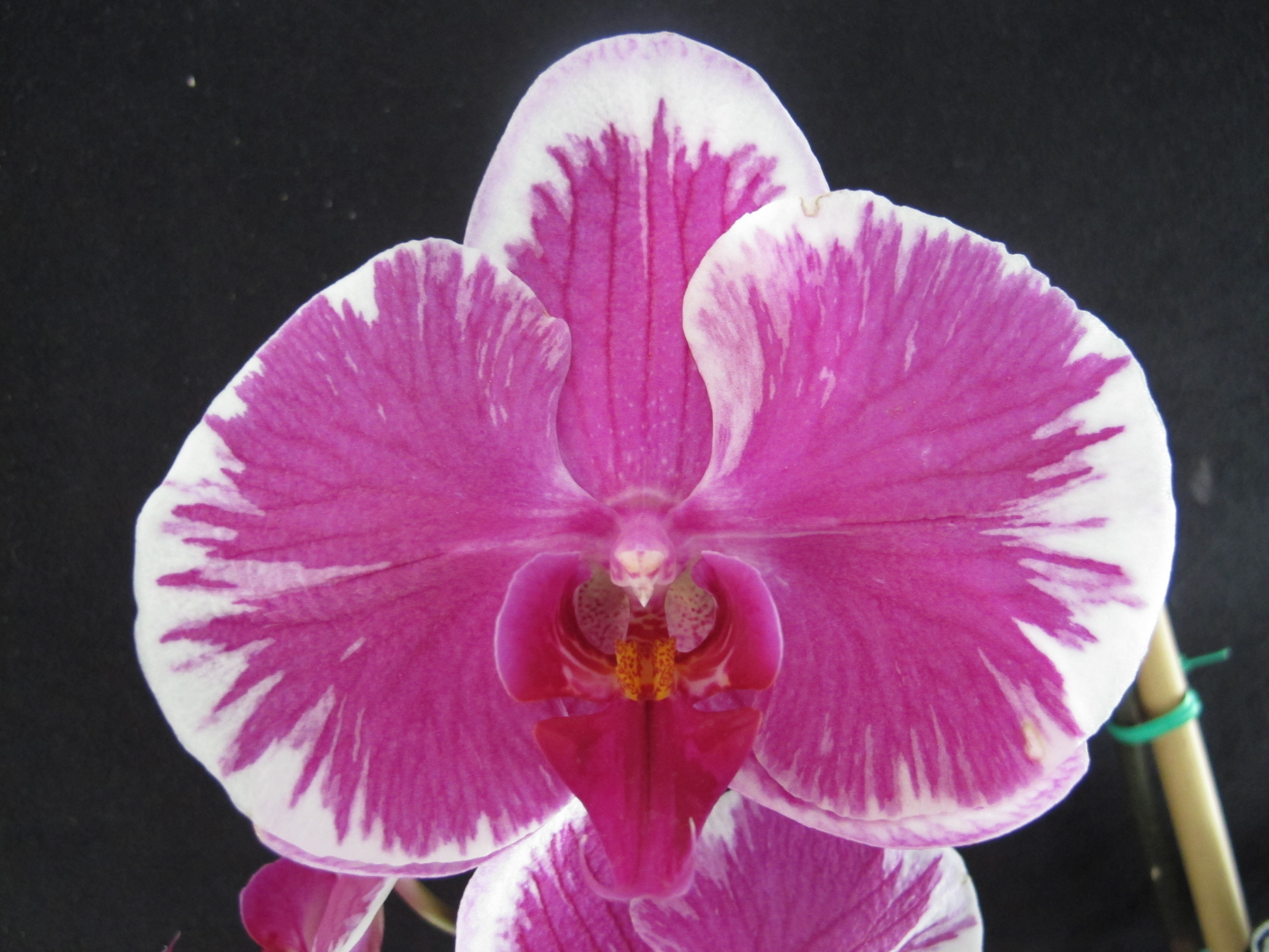 grow orchids